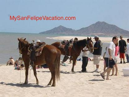 Horseback riding San Felipe, Baja California
