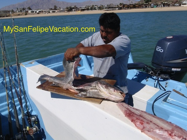 Fishing and Fishing Tips for San Felipe, Baja, Mexico Image-2