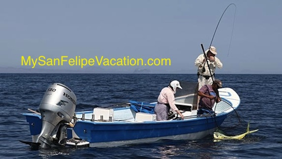 Fishing and Fishing Tips for San Felipe, Baja, Mexico Image-1