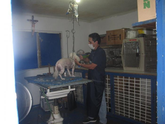 San Felipe Veterinarian & Pet Care Store Image-4