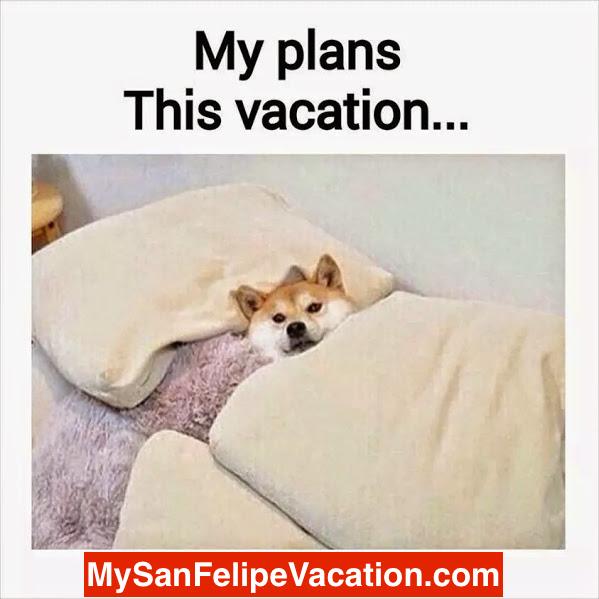 Pet Friendly San Felipe Vacation Rentals