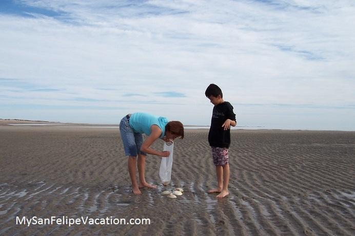 Fun Day At Shell Beach San Felipe Baja Mexico Image 2